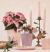 Мы любим Новый год и Рождество!