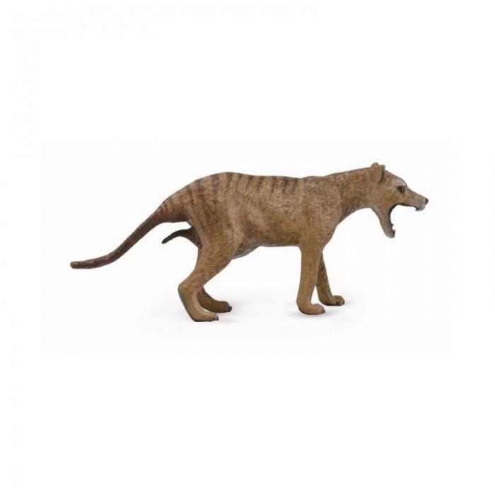 Тасманийский волк, L Collecta