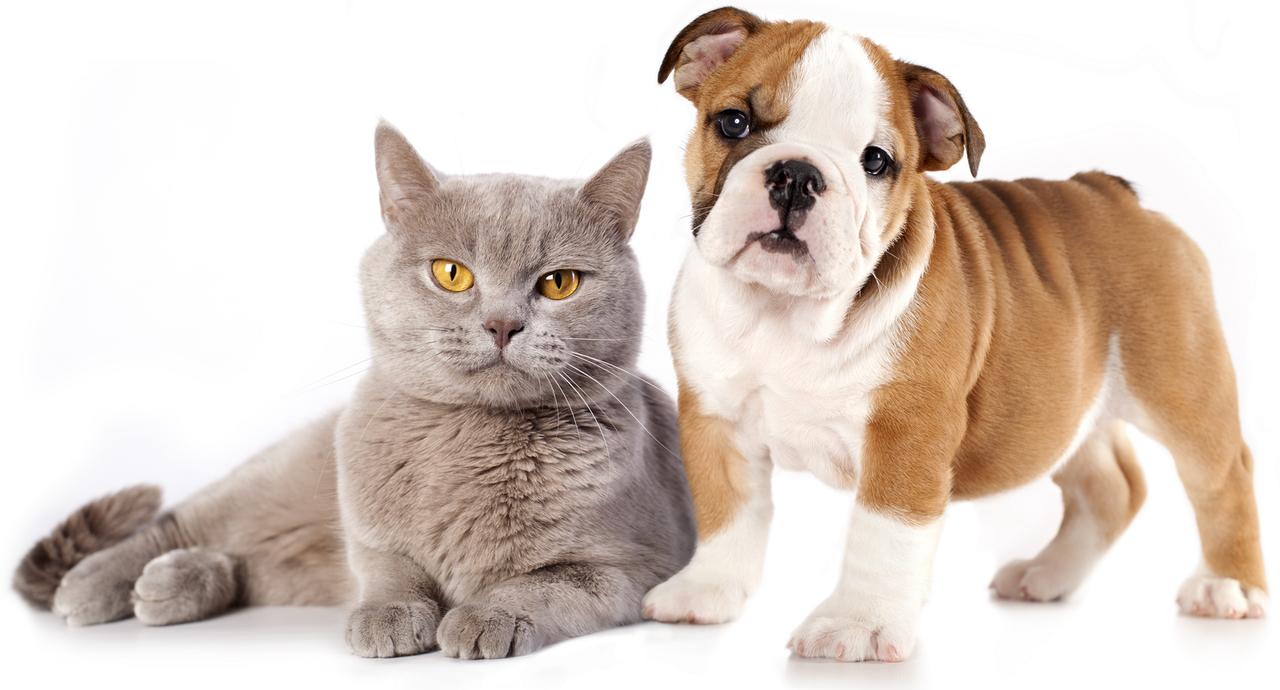 Anitox (Анитокс) - капли от паразитов и глистов для кошек и собак