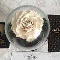 Snow White, белая роза в колбе Premium