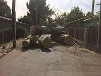 Спил деревьев в Алматы безопасно.