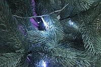 Голубая ель - 210 см, фото 3
