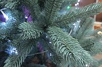 Голубая ель - 210 см, фото 2