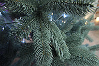 Голубая ель - 210 см, фото 4