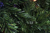 Шанхайская ель - 210 см, фото 4