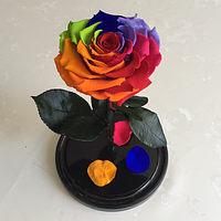 Роза в колбе Premium Мультиколор