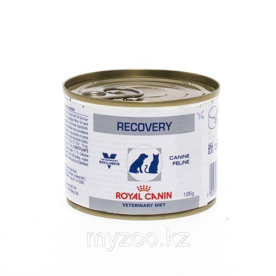 Влажный корм для собак в послеоперационный период Royal Canin RECOVERY FEL/CAN 195 g