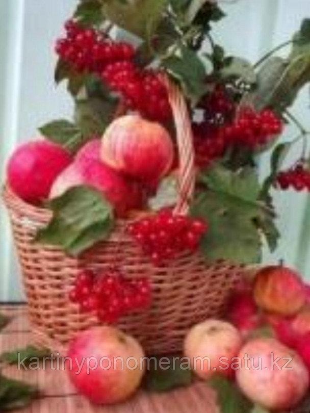 "Картина по номерам ""Яблоки и калина"""