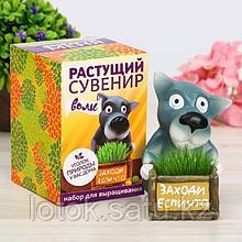 """Растущий подарок, трава в горшочке """"Волк"""""""