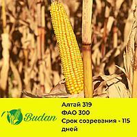 Семена кукурузы Алтай -319