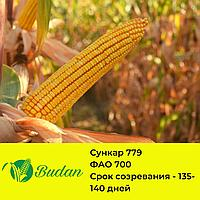 Семена кукурузы Сункар-779