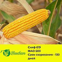 Семена кукурузы СКИФ-619