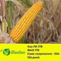 Семена кукурузы КАЗ-ЛК-178