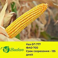 Семена кукурузы Каз-ЗП-777