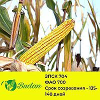 Семена кукурузы ЗПСК-704