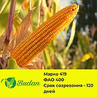 Семена кукурузы Марко-419