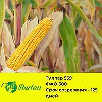Семена кукурузы Тулпар-539