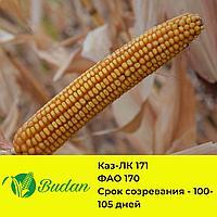 Семена кукурузы Каз-ЛК-171