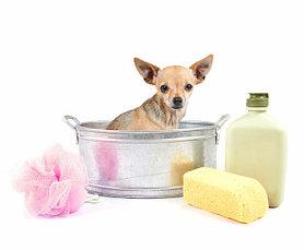Средства для гигиены собак