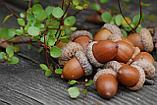 """Натуральная Шоколадно-арахисовая паста с ЖЕЛУДЯМИ """"Сила Дуба"""", 350 г, фото 4"""