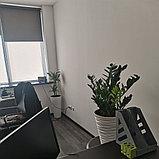Озеленение офиса, фото 4