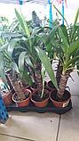 Сервисное обслуживание растений, фото 4