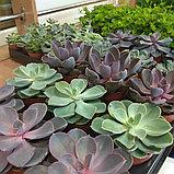Сервисное обслуживание растений, фото 2