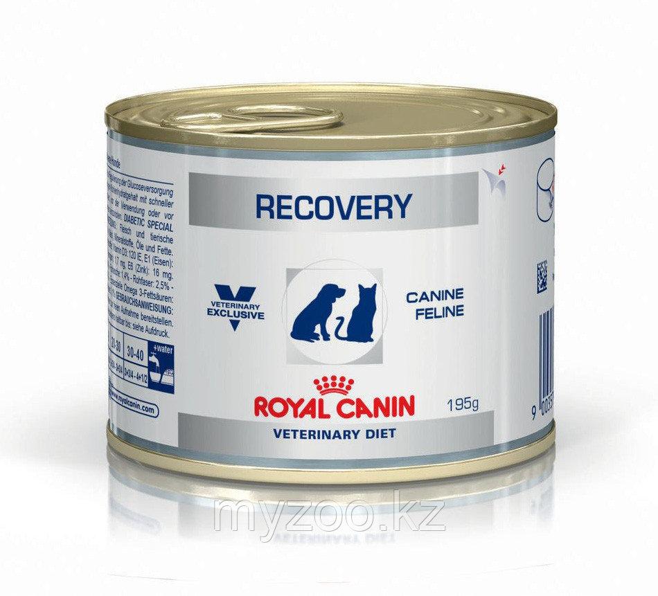 Влажный корм для кошек в послеоперационный период Royal Canin RECOVERY FEL/CAN 195 g