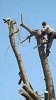 Кронирование деревьев недорого