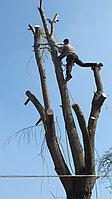 Санитарная обрезка и спил деревьев