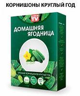 Чудо-набор для выращивания овощей и зелени дома «Сказочный огород круглый год» без ГМО (Корнишоны), фото 1