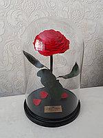 Роза красная Кинг Сайз 33 см
