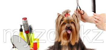 Комплексная стрижка собак мелкие породы