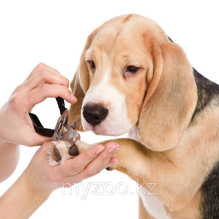 Комплексная стрижка собак средне-крупные породы