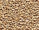 Солод пшеничный (Курск), фото 2