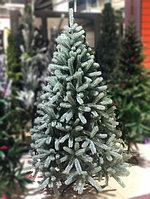 Голубая ель - 180 см, фото 2