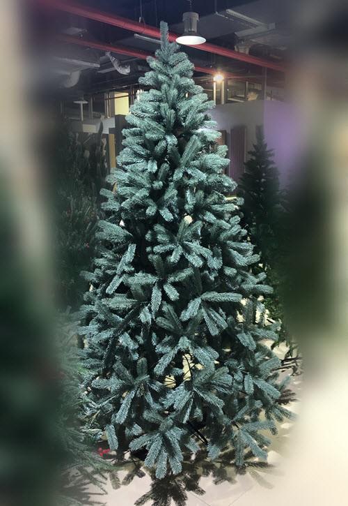 Голубая ель - 210 см