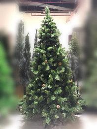 Шанхайская ель - 210 см