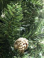 Шанхайская ель - 210 см, фото 5