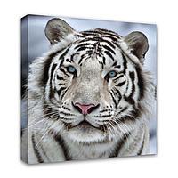 Картина Симфония 0038 Бенгальский тигр; 40*40 см