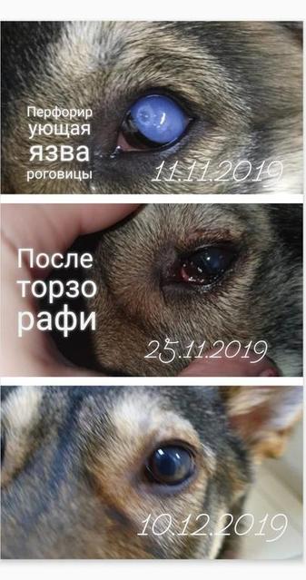 Ашихина Анна Николаевна врач общей практики, хирург,офтальмолог 6