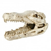 Декорация для аквариума. Череп крокодилаР-р 14 см.