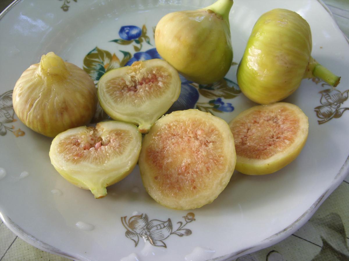 Инжир сорт Белый медовый ЗКС