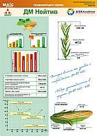 Гибрид кукурузы ДМ Нейтив/ФАО 500