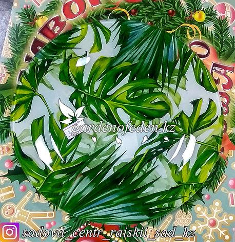 Тарелка десертная, с узором. Цвет: Бело-зеленый. Материал: Стекло., фото 2