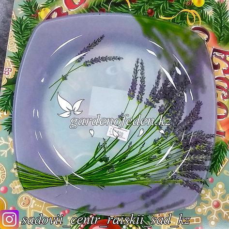 Тарелка подставная, с узором. Цвет: Сиреневый. Материал: Стекло., фото 2