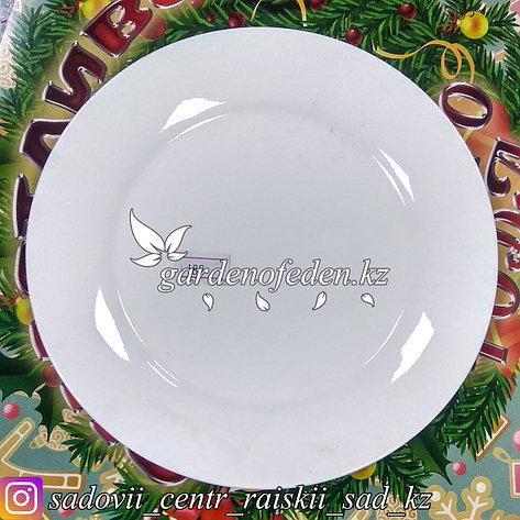 Тарелка десертная, малая. Цвет: Белый. Материал: Керамика., фото 2