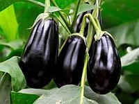 Семена баклажана Morano