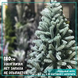 Голубая ель - 180 см