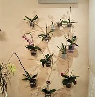 """Подставка для цветы """"Дерево-15 для орхидеи"""" настенная"""